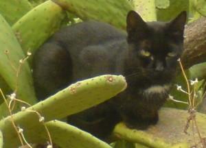 Černá kočka nosí smůlu?