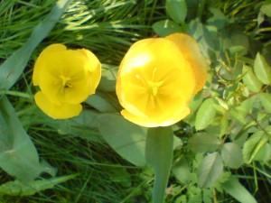 Ke dni matek se hodí věnovat mamince květinu